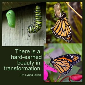 Image: Stages of Metamorphosis of a butterfly