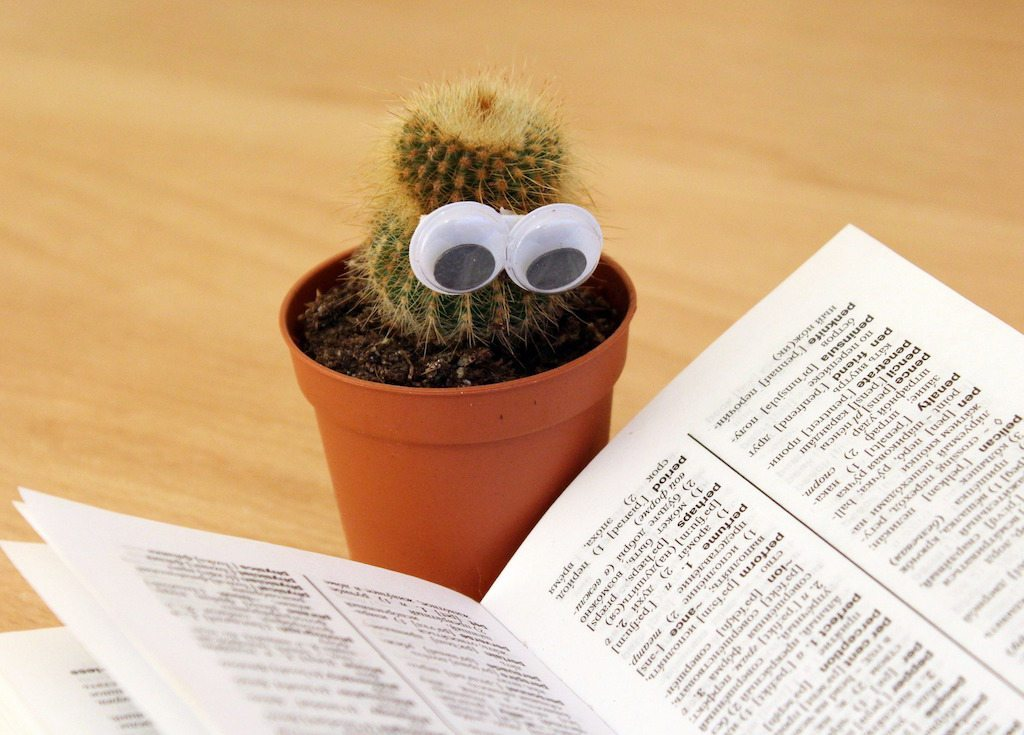 Image: Cactus with eyes attached reading the dictionary