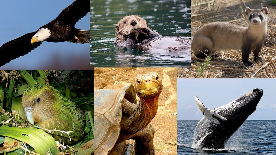 Image: seven species saved from extinction