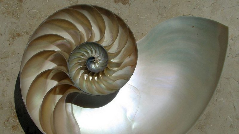 Image: A spiral nautilus shell
