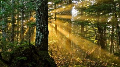 Image: Light coming through forests