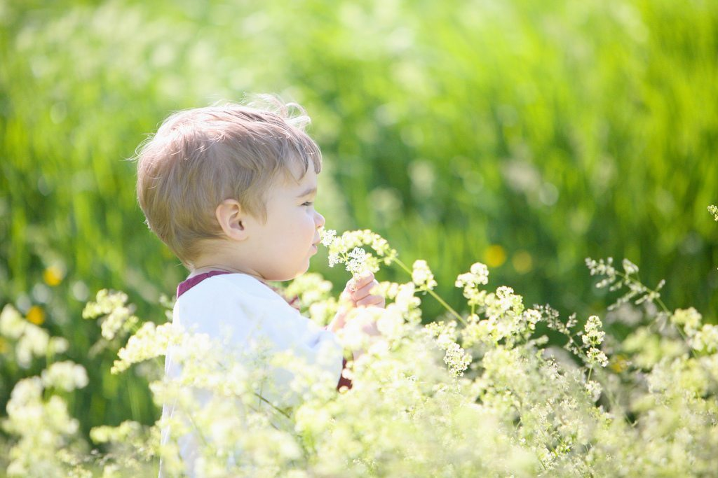 Image: A little boy smelling some wildflowers