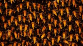 Image: Photo of the dozens of Himalayan Honey Bees also known as Apis Dorsata, the largest honey bees in the world.