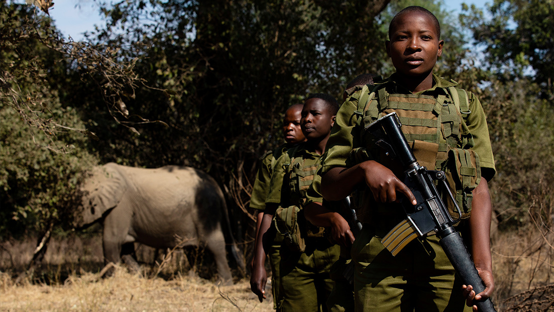 Image: Women Anti-Poaching Rangers are training to guard elephants from poachers