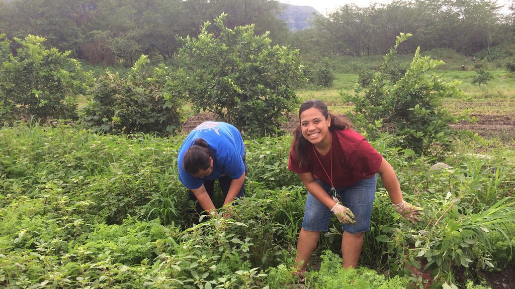 Image: Workers at MA'O Farms smile and pick weeds