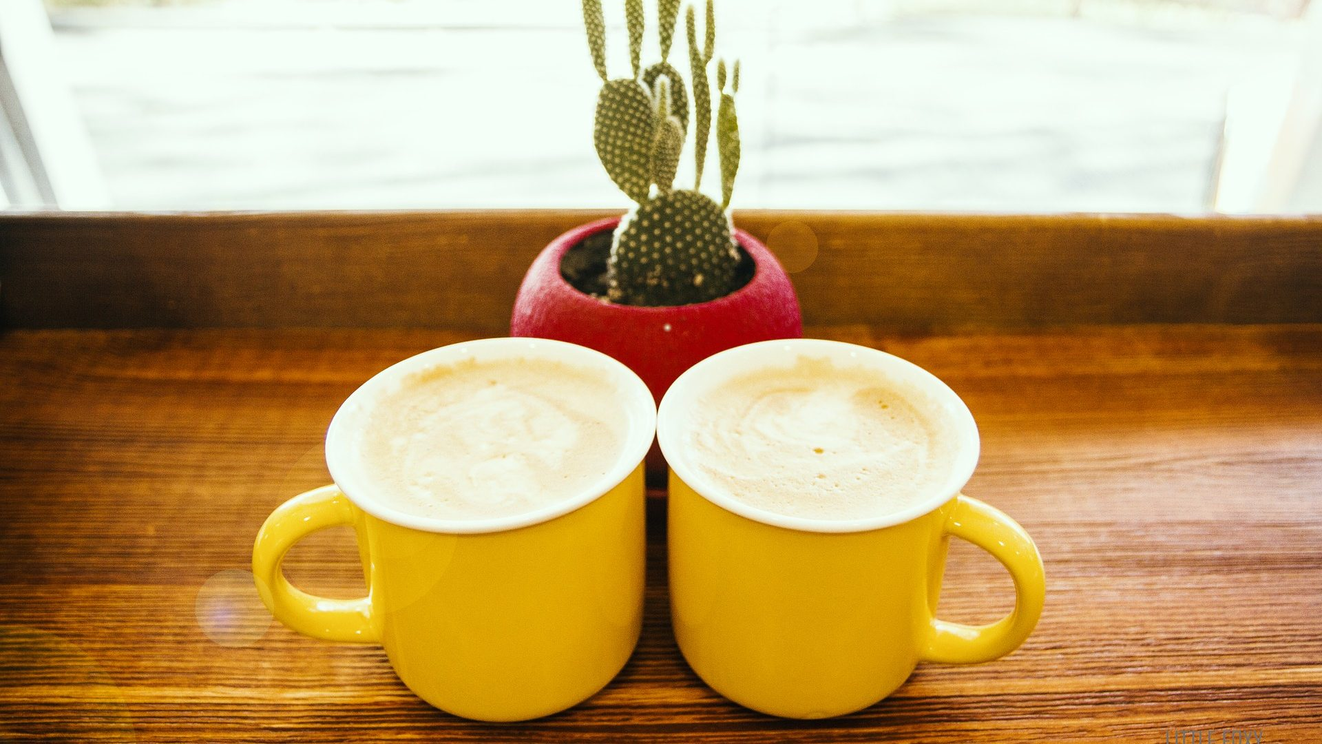 Image: Two coffee cups sitting in front of a cactus