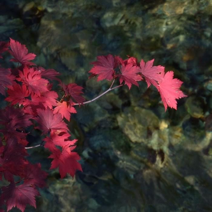 seoraksan national park red leaves water 700x700 - Hiking in Seoraksan National Park - Biseondae