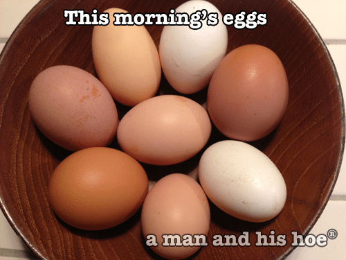 Morning-Eggs