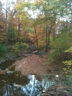Fall Color at Sligo Creek