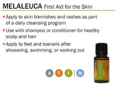 Melaleuca Essential Oil Review DoTerra
