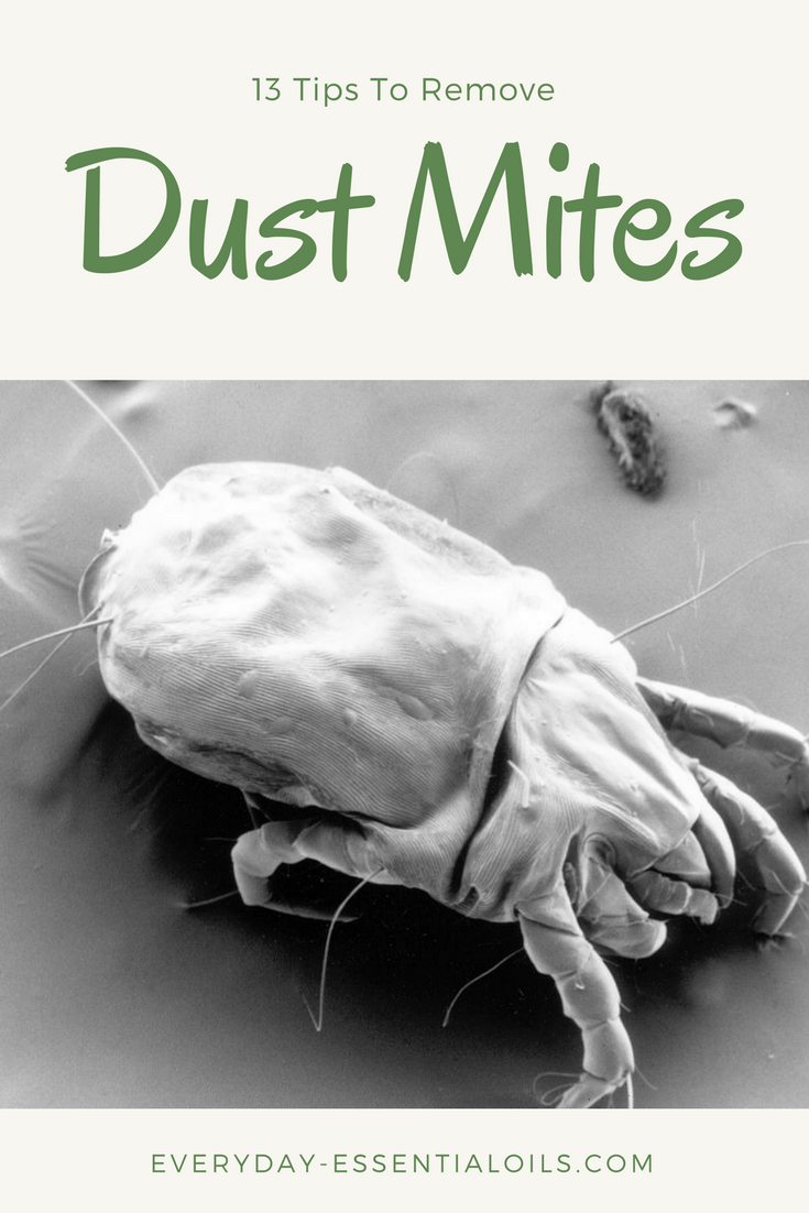 Cleanse Your Mattress of Dust Mites