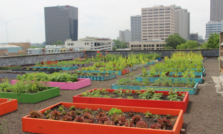 Homeless Activists Go Organic and Feed an Entire Shelter With Rooftop Garden