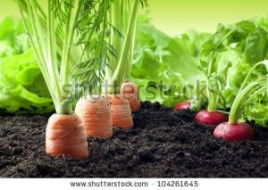 You can grow healthy vegetables in rooms, expert