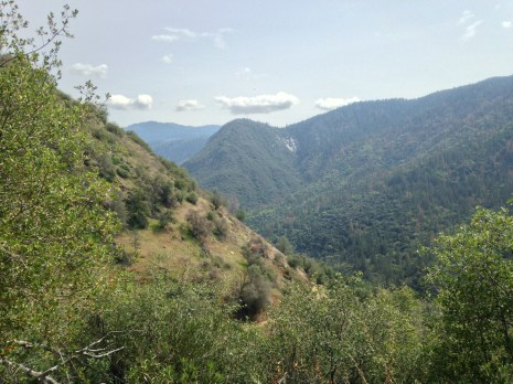 foresta road view