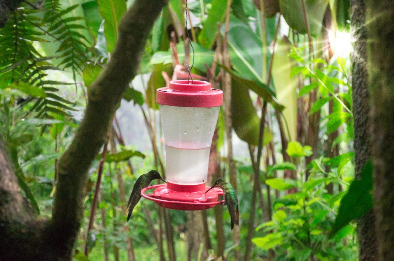 Catarata del toro hummingbirds