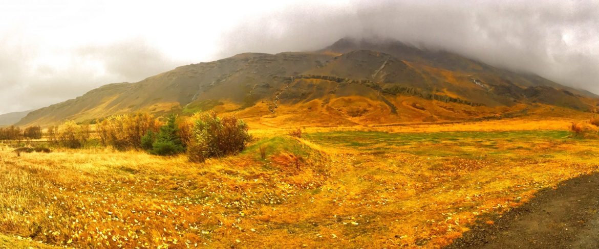 Beautiful autumn colors just outside of Reykjavik. What to do in Reykjavik, Iceland.