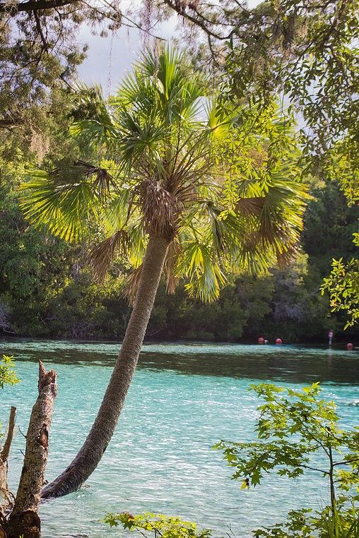 Silver Glen Springs, Ocala National Forest, Florida