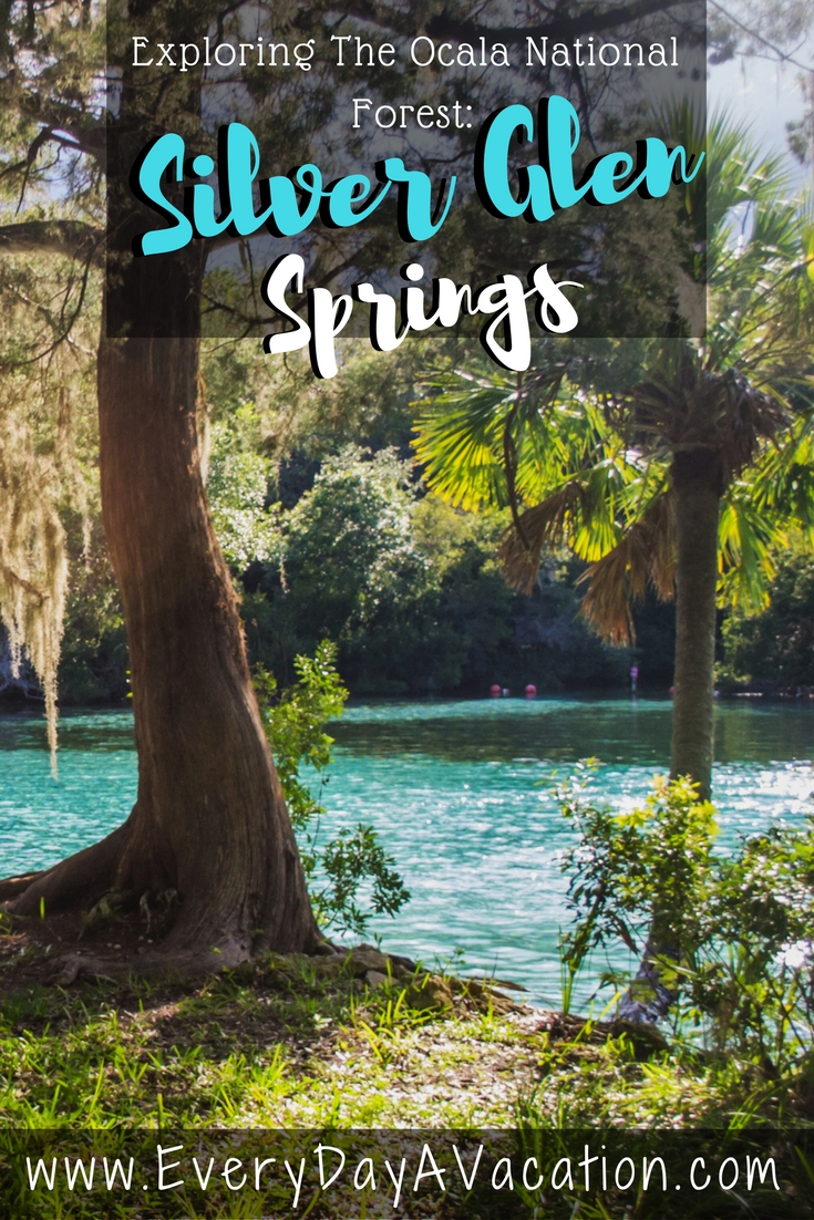 Exploring the Ocala National Forest: Silver Glen Spring, Florida