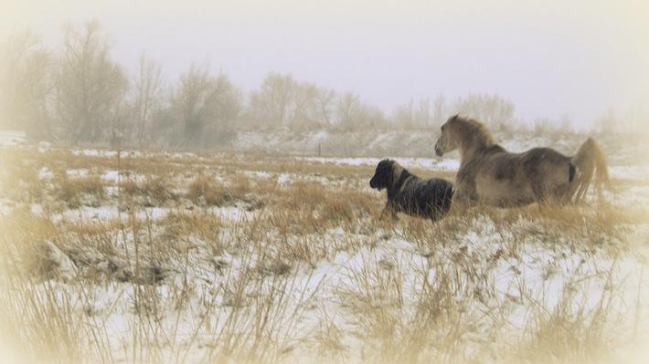 pony friends in farmington, snow...still, still, still
