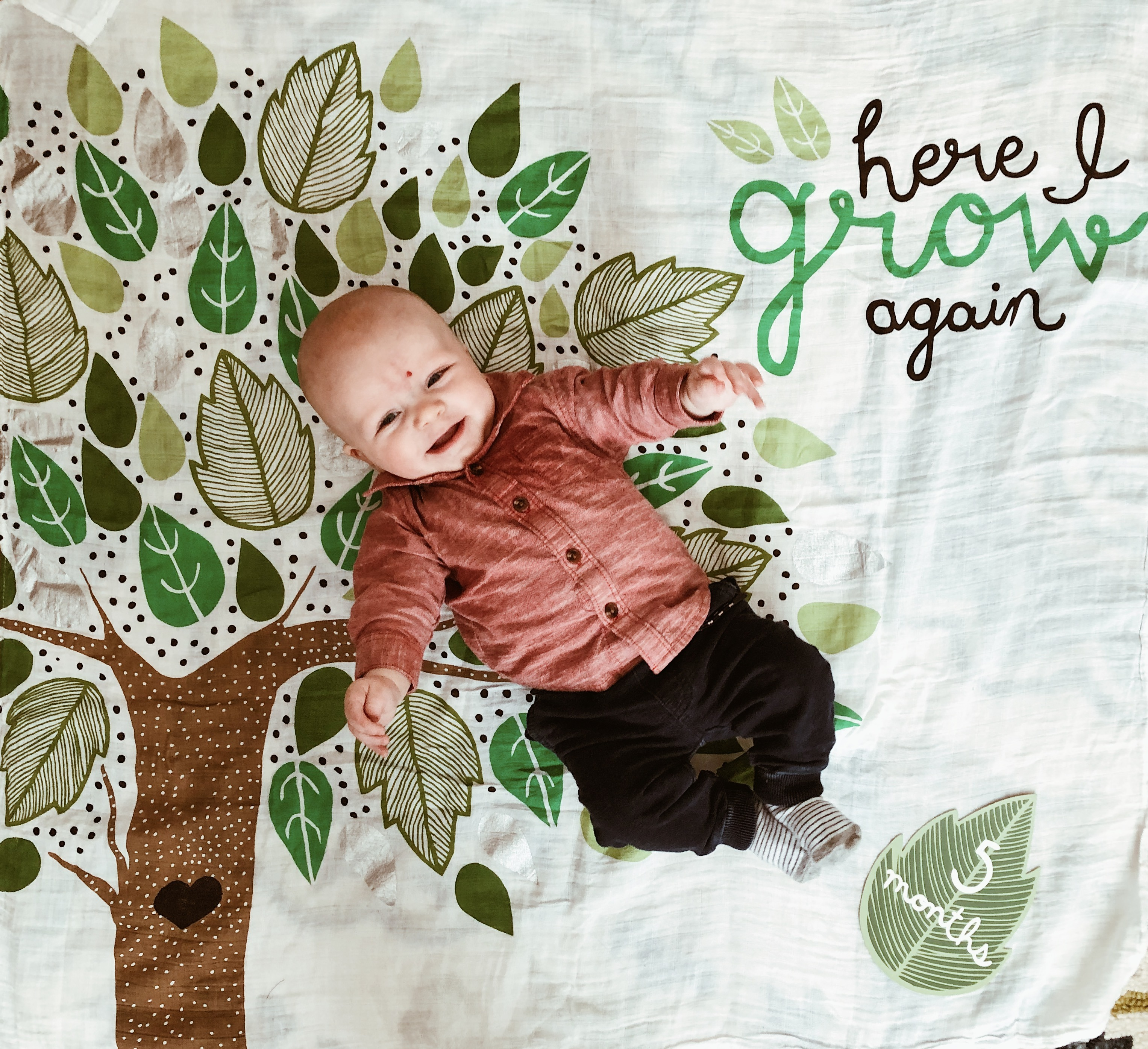 5 Month Update: Addison James | Everyday Mama