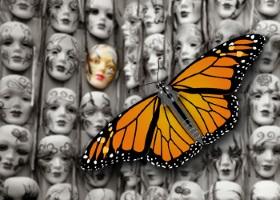 cia-monarch