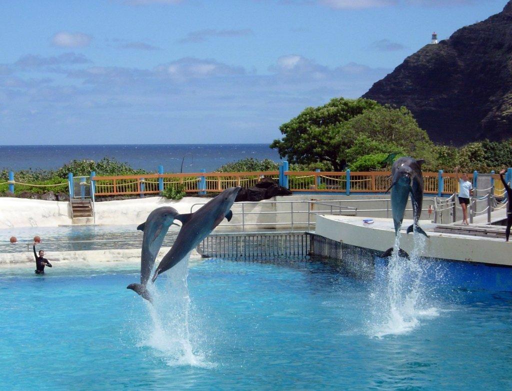 Oahu Sealife Park with Kids Go Oahu card