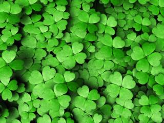 don't forget to wear your green shamrocks