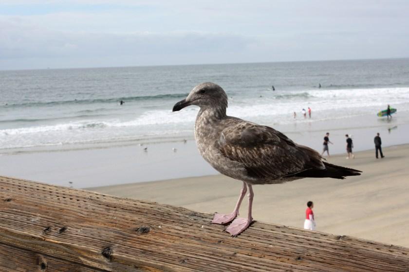 img_2480-bird-beach