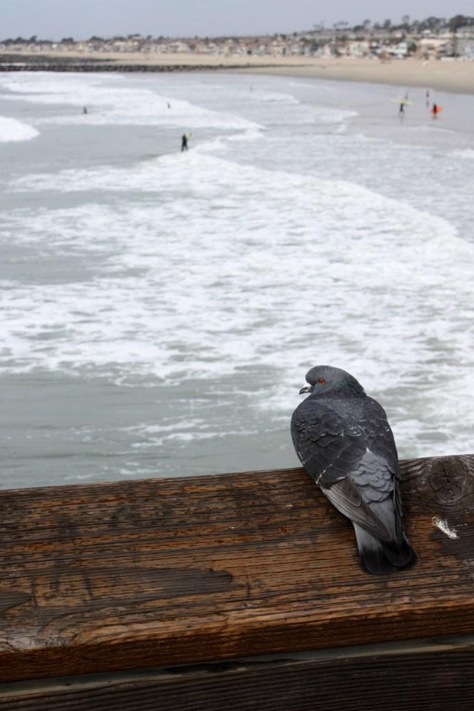 img_2497-bird-ocean