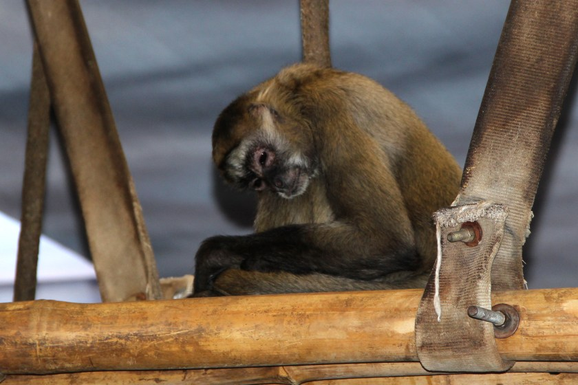 img_9191-sleepy-monkey