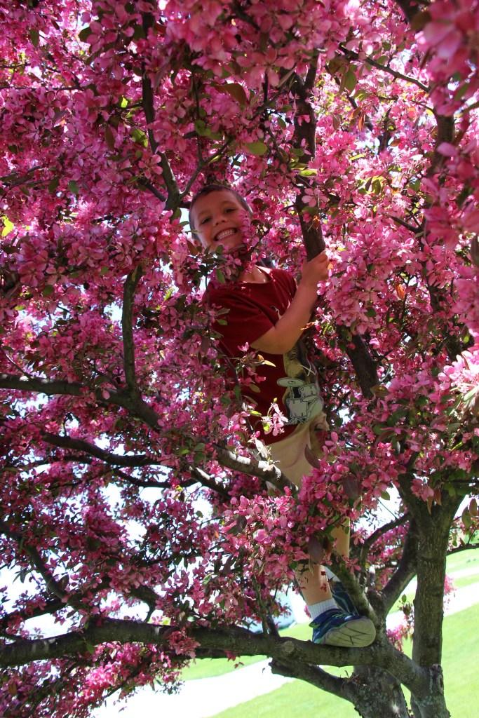 IMG_1953 tree climbing