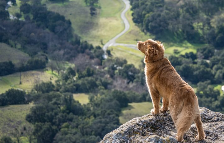 7 Steps To Build Confidence In Your Dog - The Everyday Dog Magazine