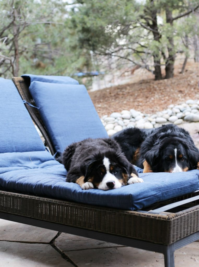 pottery-barn-knockoff-chaise