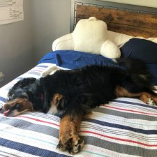 The Dog Days of Summer | Week-Ending in July