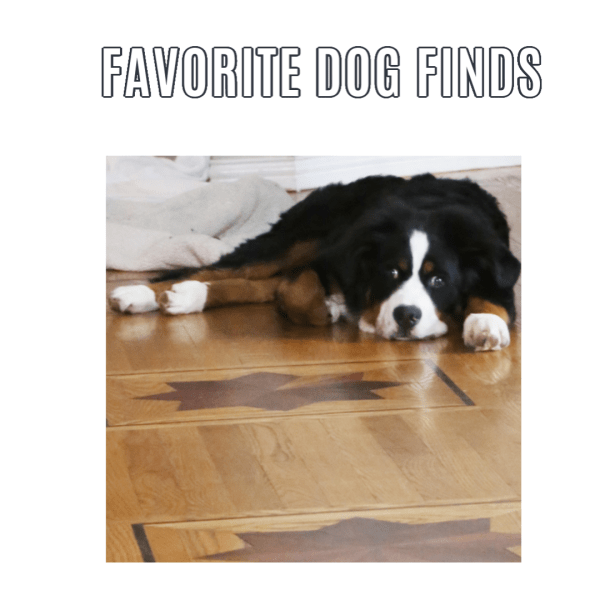 Favorite Dog Finds