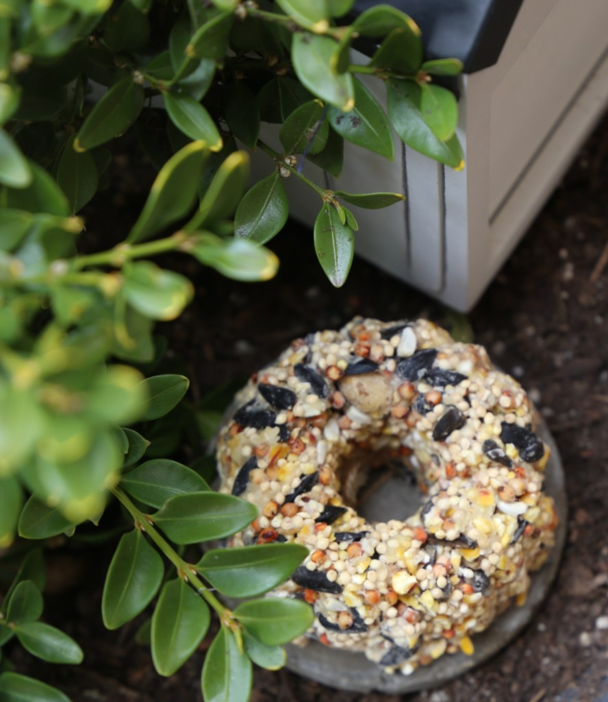 how-to-make-birdseed-cakes