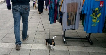 This tiny puppy also visited.