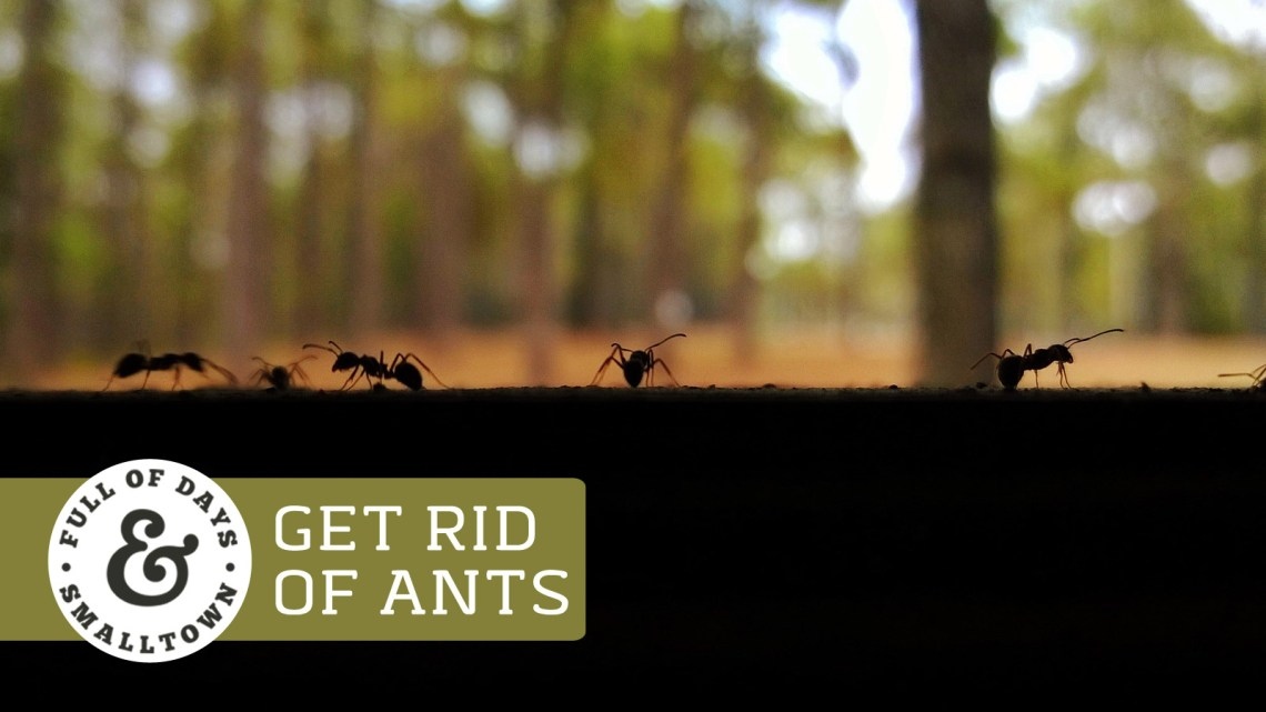 Get-Rid-of-Ants_Full-of-Days_1600-x-900