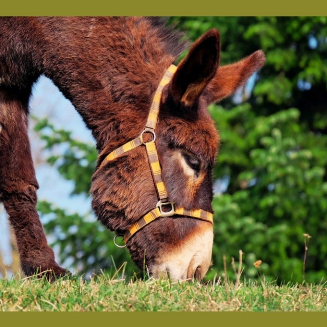 Letting Your Donkey Lead You
