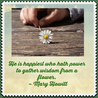 wisdom from a flower