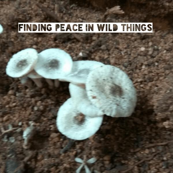 Finding Peace In Wild Things #weekendcoffeeshare