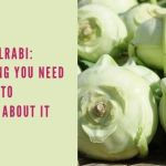 Kohlrabi: Everything you Need to Know About It