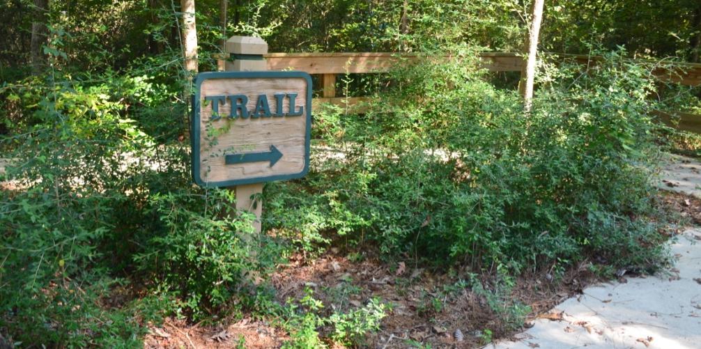 7 Best Hiking Spots in Texas