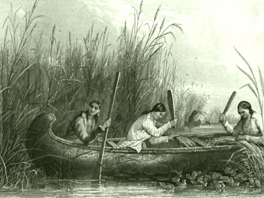Wild Rice Harvesting 19th Century public domain