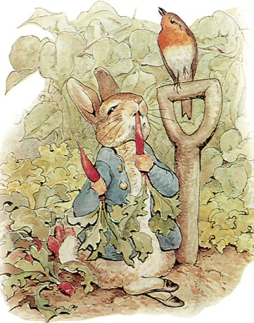 Peter Rabbit w/ Radishes (public domain)
