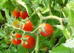 Greek Salad— Fresh, Vibrant, Easy