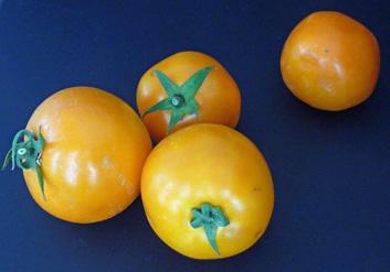 Fresh Tomato Salad – Summer's Essential Salad