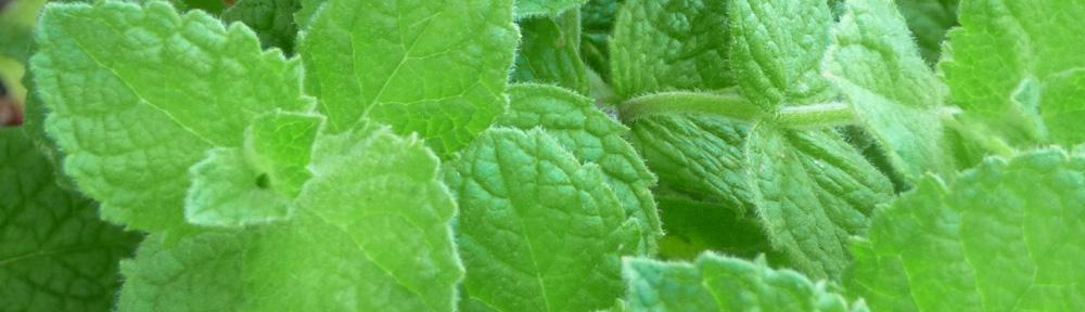 Fresh Mint Tea - Herbal Infusion - Tisane