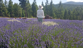 Montana Lavender Farm Overlooking Flathead Lake