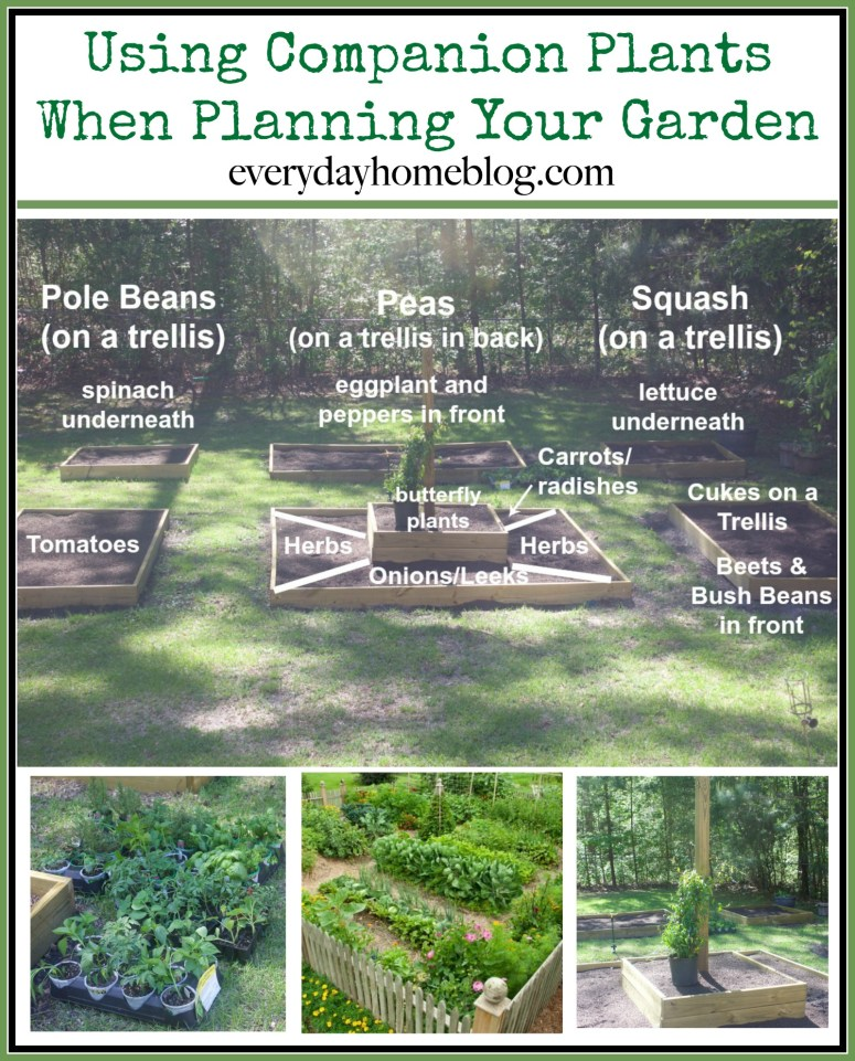 Using Companion Plants When Planning Your Garden | The Everyday Home | www.everydayhomeblog.com